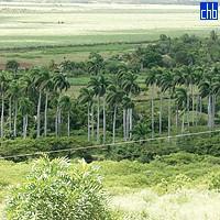 Royal Palms, Campismo Cerro de Caisimu