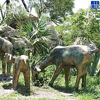 Zoológico de Piedra