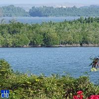 Bahia de Guantanamo manglares