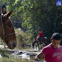 Local Famers (Campesinos) and their Mules