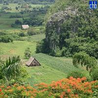 Valle de Viñales, Pinar del Rio, Kuba