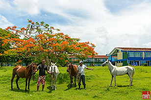 Horse Riding is included at Hotel Rancho Luna Beach