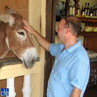 Resident donkey that likes beer